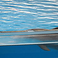 Dolphin Show - National Aquarium In Baltimore Md - 121211 by DC Photographer