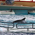 Dolphin Show - National Aquarium In Baltimore Md - 1212115 by DC Photographer