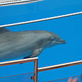 Dolphin Show - National Aquarium In Baltimore Md - 1212121 by DC Photographer