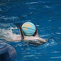 Dolphin Show - National Aquarium In Baltimore Md - 1212155 by DC Photographer
