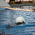 Dolphin Show - National Aquarium In Baltimore Md - 1212164 by DC Photographer