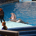 Dolphin Show - National Aquarium In Baltimore Md - 1212174 by DC Photographer