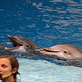 Dolphin Show - National Aquarium In Baltimore Md - 1212177 by DC Photographer
