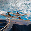 Dolphin Show - National Aquarium In Baltimore Md - 1212186 by DC Photographer
