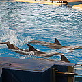 Dolphin Show - National Aquarium In Baltimore Md - 1212187 by DC Photographer