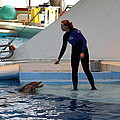 Dolphin Show - National Aquarium In Baltimore Md - 1212196 by DC Photographer