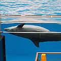 Dolphin Show - National Aquarium In Baltimore Md - 1212198 by DC Photographer