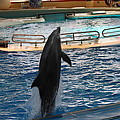 Dolphin Show - National Aquarium In Baltimore Md - 1212209 by DC Photographer