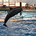 Dolphin Show - National Aquarium In Baltimore Md - 1212212 by DC Photographer