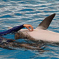 Dolphin Show - National Aquarium In Baltimore Md - 1212231 by DC Photographer