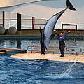 Dolphin Show - National Aquarium In Baltimore Md - 1212273 by DC Photographer