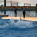 Dolphin Show - National Aquarium In Baltimore Md - 1212278 by DC Photographer