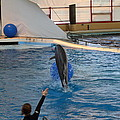 Dolphin Show - National Aquarium In Baltimore Md - 121239 by DC Photographer