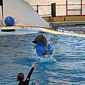 Dolphin Show - National Aquarium In Baltimore Md - 121240 by DC Photographer