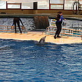 Dolphin Show - National Aquarium In Baltimore Md - 121246 by DC Photographer