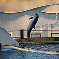Dolphin Show - National Aquarium In Baltimore Md - 121255 by DC Photographer