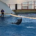 Dolphin Show - National Aquarium In Baltimore Md - 121258 by DC Photographer