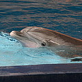 Dolphin Show - National Aquarium In Baltimore Md - 121261 by DC Photographer