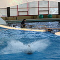 Dolphin Show - National Aquarium In Baltimore Md - 121297 by DC Photographer