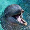 Dolphin Smile by Photos By  Cassandra