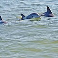 Dolphins 2 by William Morgan