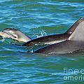 Dolphins by Stephen Whalen