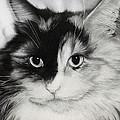 Domestic Cat by Natasha Denger