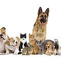 Domestic Mammal Pets by Jean-Michel Labat
