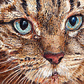 Domestic Tabby Cat by Portraits By NC