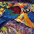 Dominican Birds by Brenda Loschiavo