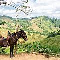 Donkey And Hills by Jess Kraft