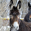 Donkey And The Mule by Bonfire Photography