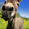Donkey by Bernard Jaubert