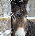 Donkey by Bonfire Photography