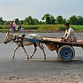 Donkey Cart Driver And Motorcycle On Pakistan Highway by Imran Ahmed