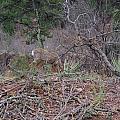 Donkey Deer Feeding by Robert Wiener