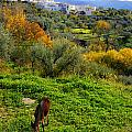 Donkey by Guido Montanes Castillo