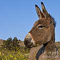 Donkey In Greece by Jean-Louis Klein and Marie-Luce Hubert