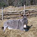 Donkey In Hay by Zak