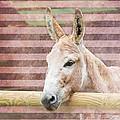 Donkey by Pati Photography