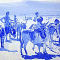Donkey's On The Beach by Derek Williams
