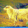 Dont Be Sheep, You Said, But I Just Can't Help It by Hilde Widerberg