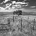 Don't Fence Me In - Black And White by Peter Tellone