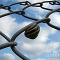 Don't Fence Me In by Brothers Beerens