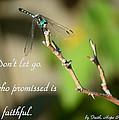 Don't Let Go by Leticia Latocki
