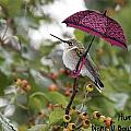 Don't Let It Rain On My Tree by Diane V Bouse