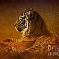 Don't Wake A Sleeping Tiger by Betty LaRue