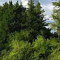 Door County Cana Island Vertical Panorama by Christopher Arndt