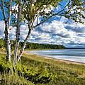 Door County Europe Bay Birch by Christopher Arndt