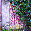 Door Covered In Ivy by Bill Cannon